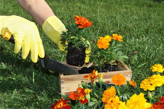 bioart jardins jardinagem itajai camboriu itapema bc